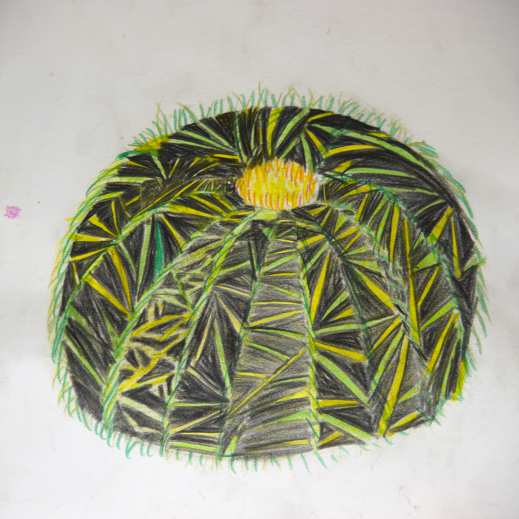 Kaktus - Buntstift - Schülerarbeit - Foto: © Katharina Hansen-Gluschitz