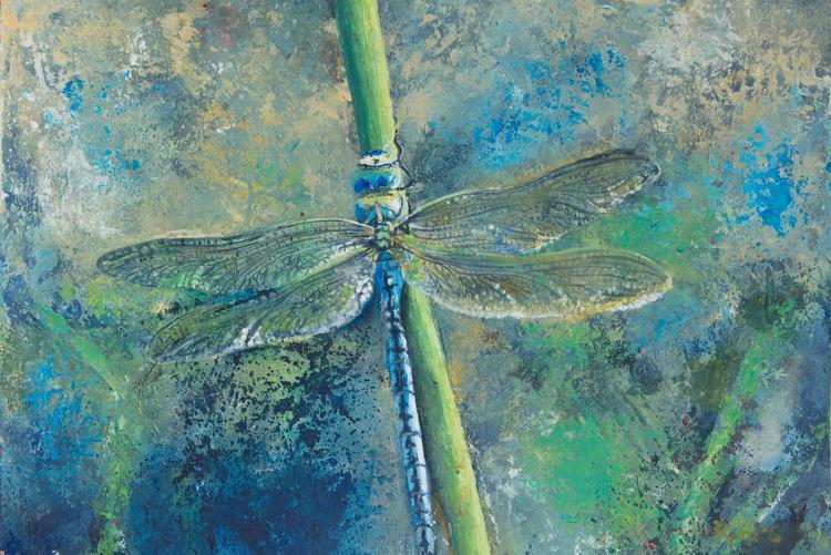 Libelle - Acryl auf Papier © Katharina Hansen-Gluschitz