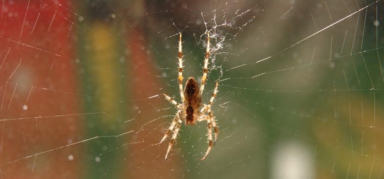 Spinne © Katharina Hansen-Gluschitz
