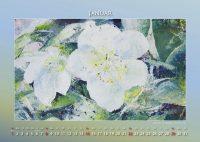 Christrose - Blumen in Acryl - Kalender © Katharina Hansen-Gluschitz