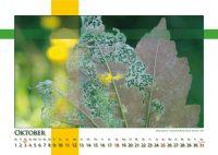 Metamorphose - Strukturen - Kalender 2020 © Katharina Hansen-Gluschitz