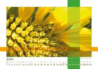 Der Sonne zugewandt - Strukturen - Kalender 2020 © Katharina Hansen-Gluschitz