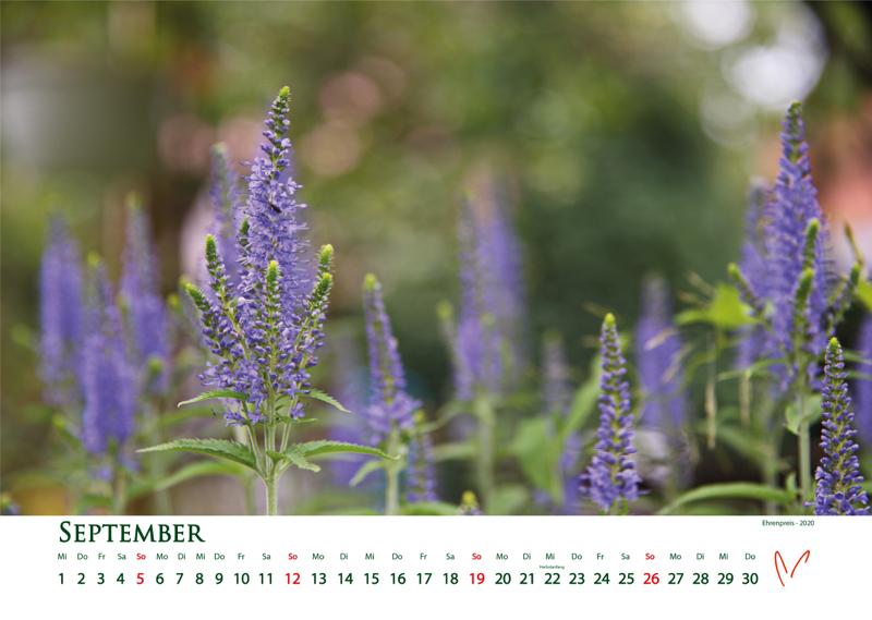 Blütenträume 2021 - Kalender September © Katharina Hansen-Gluschitz