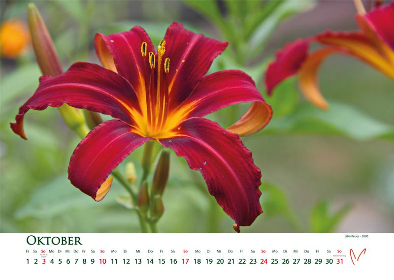 Blütenträume 2021 - Kalender Oktober © Katharina Hansen-Gluschitz