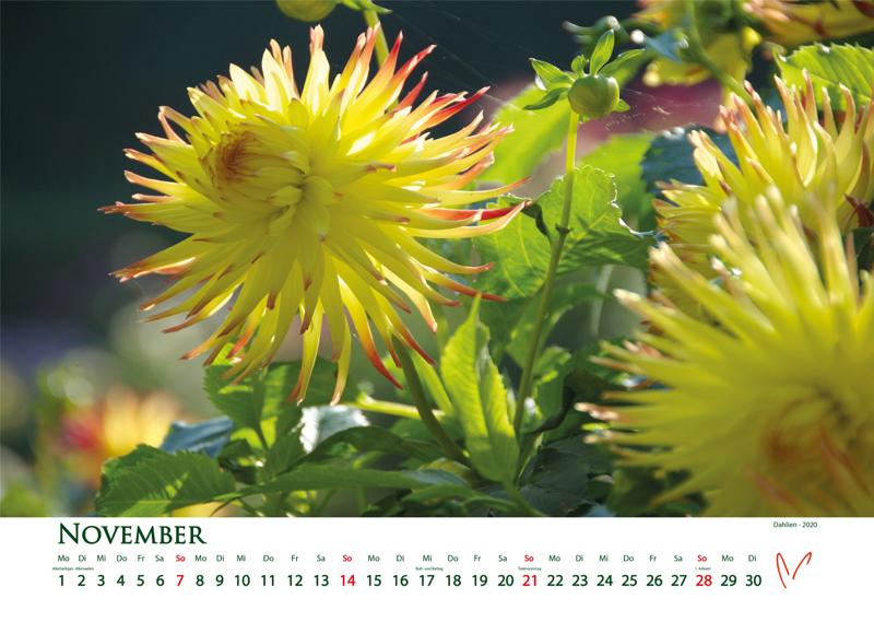 Blütenträume 2021 - Kalender November © Katharina Hansen-Gluschitz