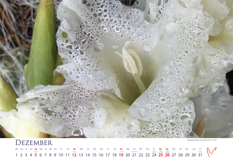 Blütenträume 2021 - Kalender Dezember © Katharina Hansen-Gluschitz