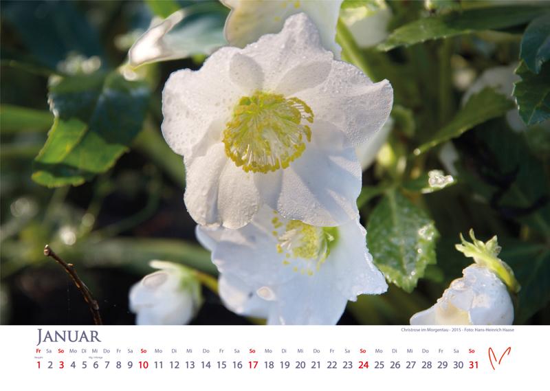 Blütenträume 2021 - Kalender Januar © Katharina Hansen-Gluschitz
