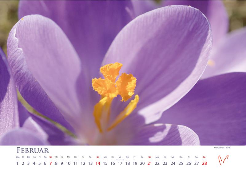 Blütenträume 2021 - Kalender Februar © Katharina Hansen-Gluschitz