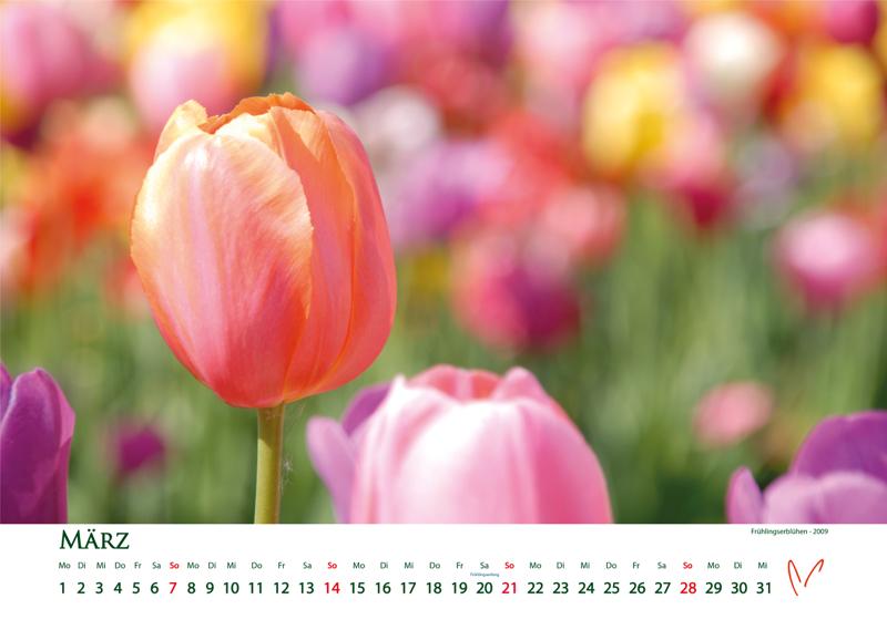 Blütenträume 2021 - Kalender März © Katharina Hansen-Gluschitz