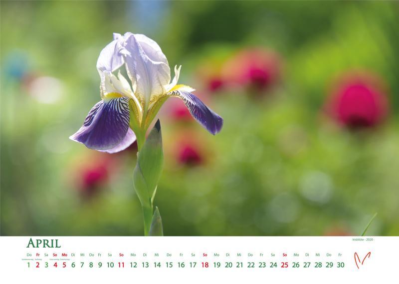 Blütenträume 2021 - Kalender April © Katharina Hansen-Gluschitz