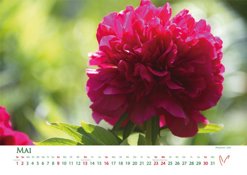 Blütenträume 2021 - Kalender Mai © Katharina Hansen-Gluschitz