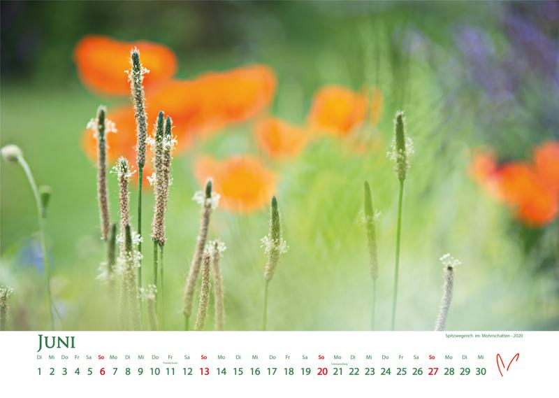 Blütenträume 2021 - Kalender Juni © Katharina Hansen-Gluschitz