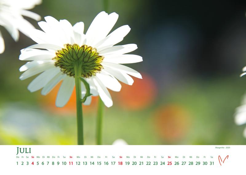 Blütenträume 2021 - Kalender Juli © Katharina Hansen-Gluschitz