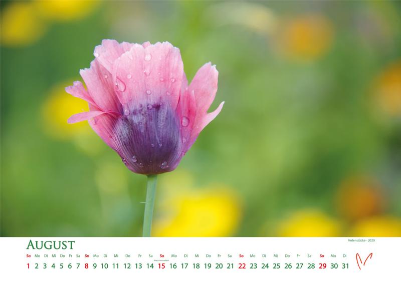 Blütenträume 2021 - Kalender August © Katharina Hansen-Gluschitz